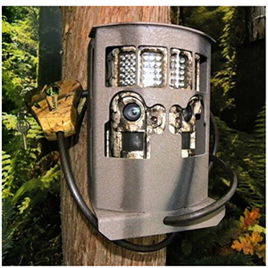 CASE seulement Camlock Security Box Moultrie D-444