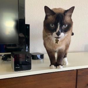 pet security camera