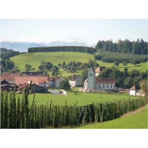 hop yard, Germany, Tettnang hops