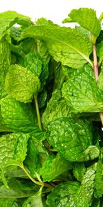 AeroGarden, Seed Pod Kit, Gourmet Herb, Mint