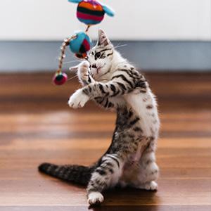 Cat behavior, cats, cat guide, cat training, cat training book