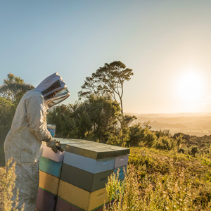 Manuka Health Neuseeland Original Imker Honig blauer Deckel MGO