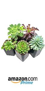 succulent succulents air plants tillandsia decor house indoor terrarium plant plants cactus cacti