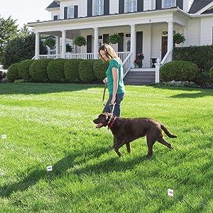 Amazon Com Petsafe Stay Amp Play Dog And Cat Wireless