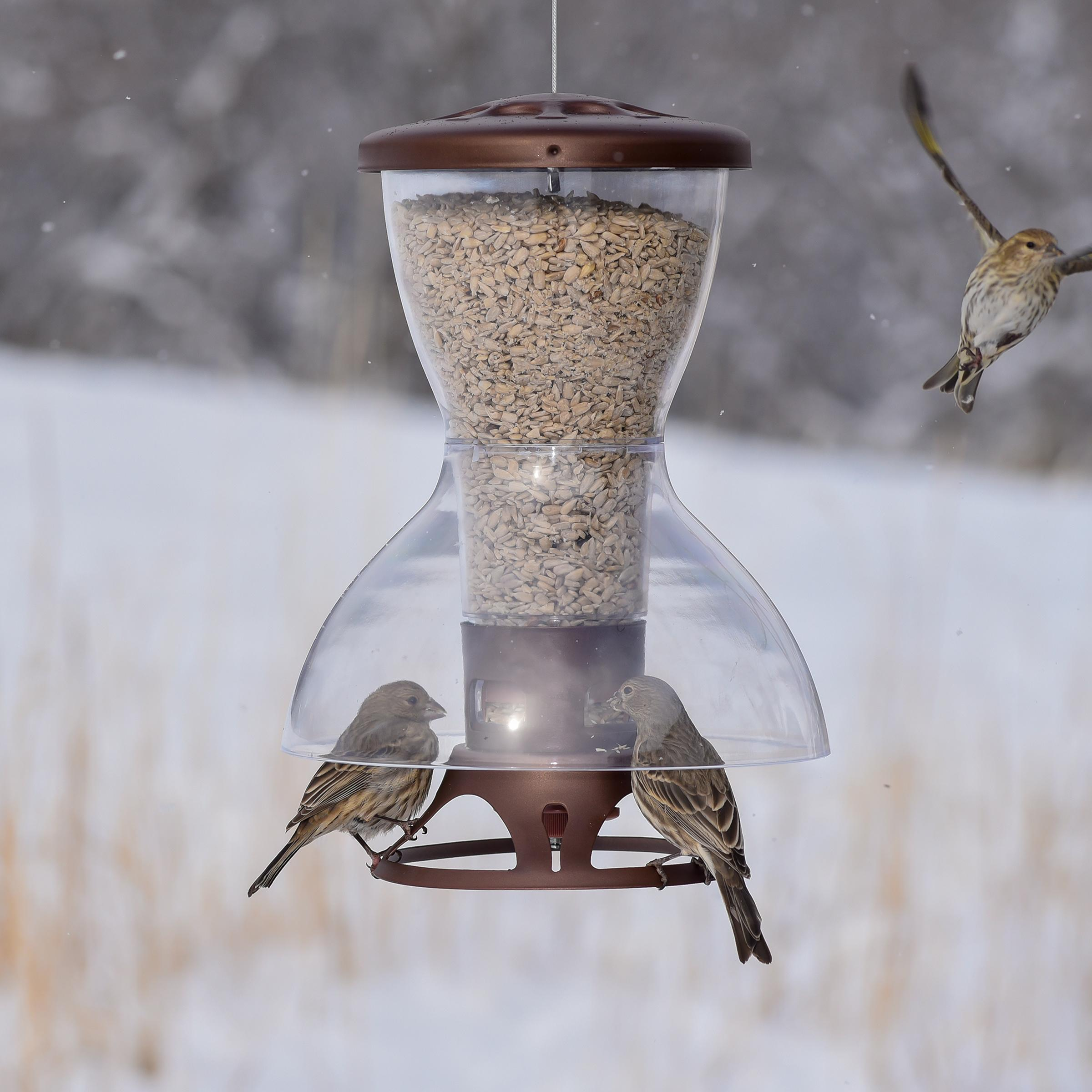 feeder proof squirrels pin to best bird how and stop brome squirrel feeders