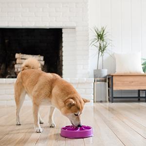 fun feeder slow bowl, slow feeding dog bowls, outward hound dog bowls, maze dog bowls