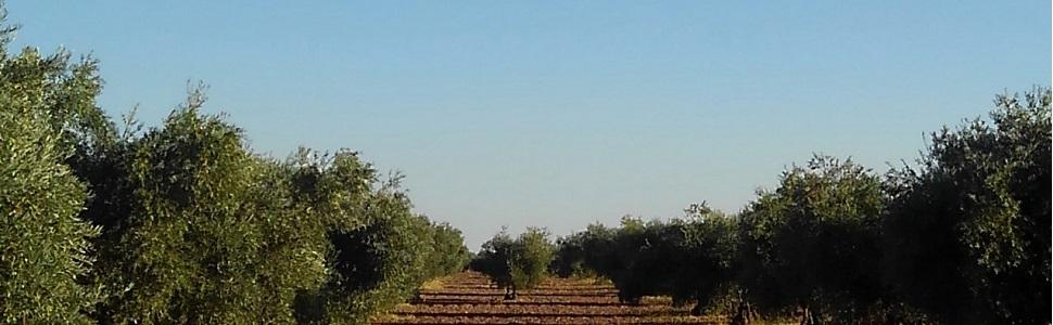 ガルシア 農家