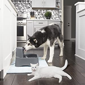 cat and dog drinking