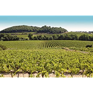 PINORD —Bodega en la elaboración del vino de Aguja en España—