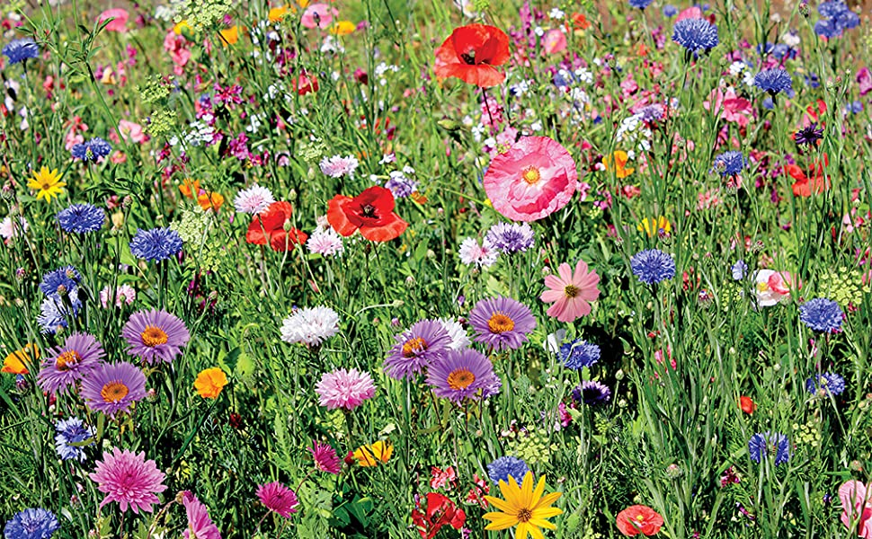 wildflowers, seed, flower, low grow, border mix, annuals, perennials, sun and shade