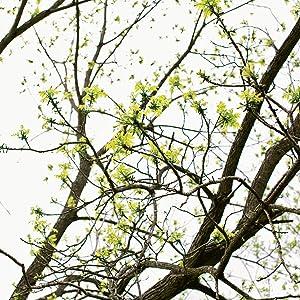 branch 2