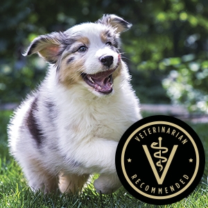 Veterinarian recommended puppy food