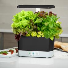 AeroGarden, Seed Pod Kit, Heirloom Salad Greens