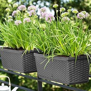 Emsa Maison De Campagne encadré AQUA COMFORT Fleurs Jardinière Jardinière de Balcon Granite 50 cm