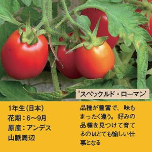 身近にある毒植物3-1.jpg