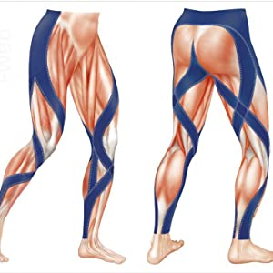 endurance pro muscle drawing