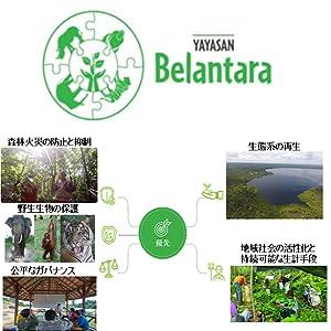 自然保護、ベランターラ基金、Belantara Foundation