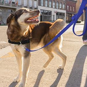 easy walk leash harness dog walking