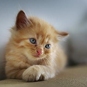 Comida para gatos animonda Rafiné Adult, comida húmeda para ...