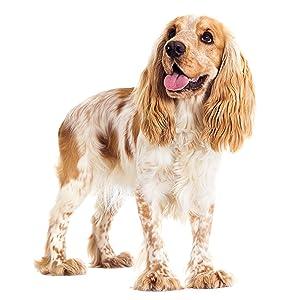 Cibo secco per cani adulti di piccola e media taglia, a base di pollo