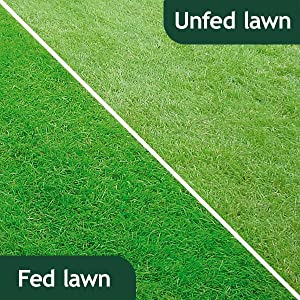 Fed and unfed lawns comparison