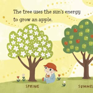 The tree uses the sun's energy to grow an apple