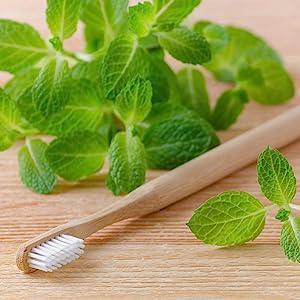 PerioBrite, Toothpaste, Natural, Herbal