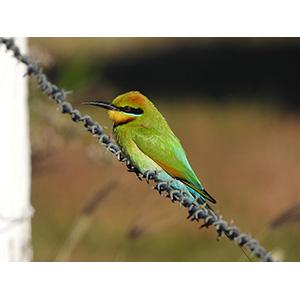 動きの早い野鳥の撮影に「鳥モード」