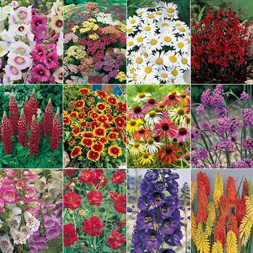 Complete Cottage Garden Perennial Plug Plant Collection