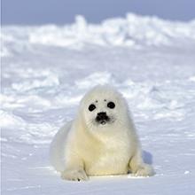 北極スマイル・南極スマイル カレンダー 2020 3月