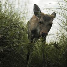奈良の鹿は野生動物