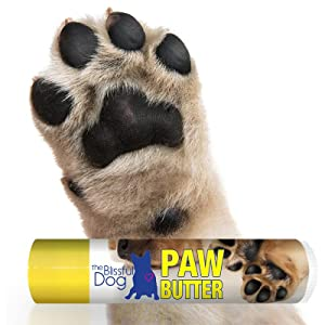 dog has dry paws