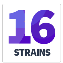 16 strains