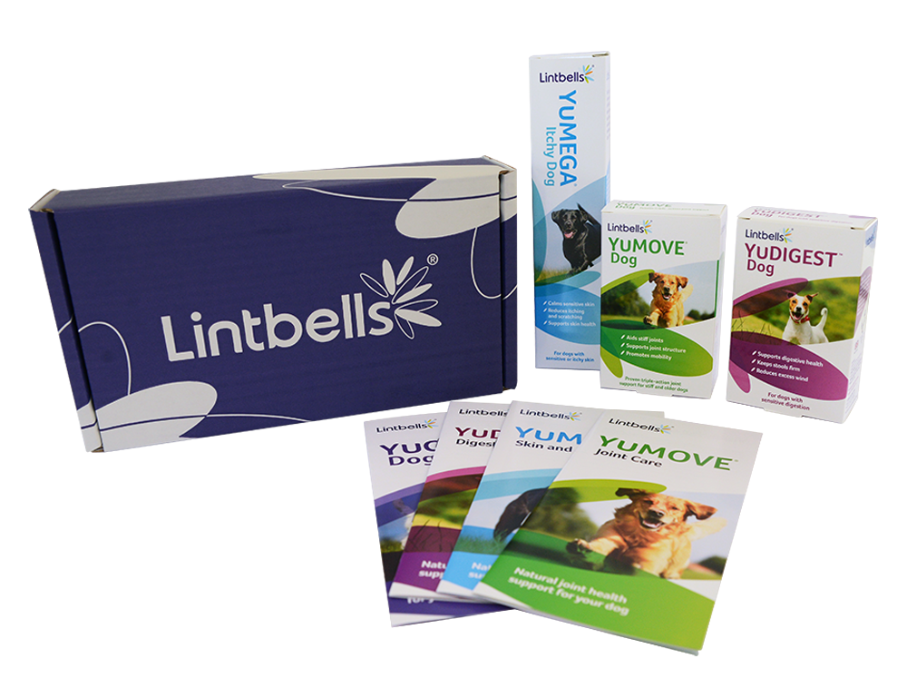 Best Nutritional Supplements For Dogs