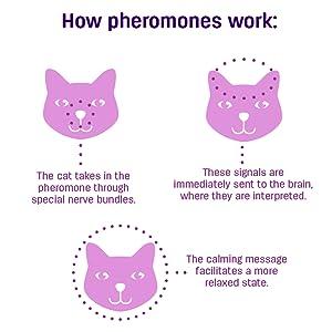 cat pheromones
