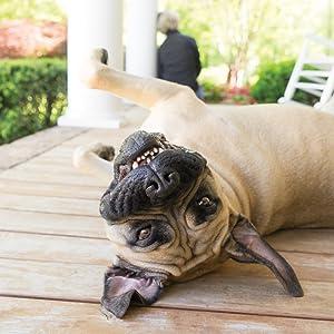 Happy dog on a porch