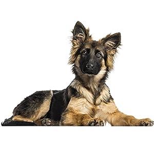 Alimento seco para cachorros y perros jóvenes de razas grandes y gigantes