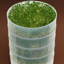 multiple tray sprouter sprouts