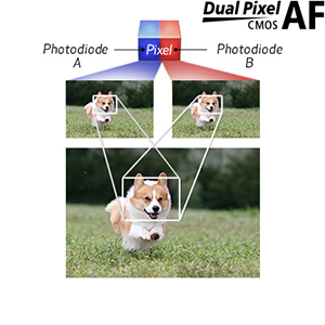 Fast and Accurate Dual Pixel CMOS AF with Eye Detection AF