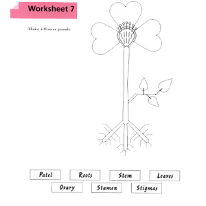 Worksheet, height length, two-dimensional shapes, phonetic alphabet, letters, words, phrases, puzzle