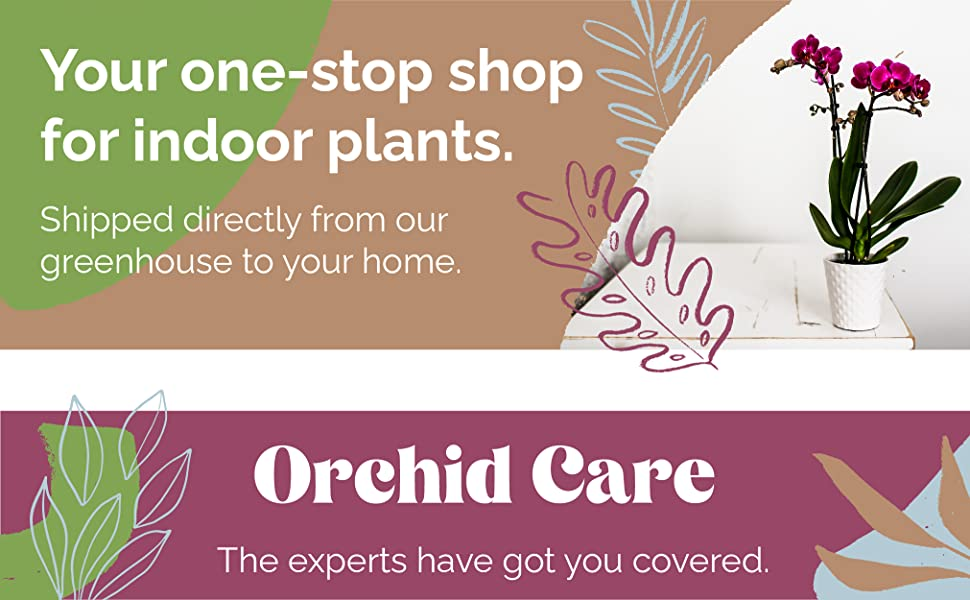 Your one-stop shop for indoor plants. Shipped directly from our greenhouse to your home. Orchid