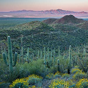 sonoran desert north america