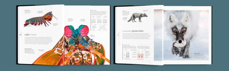 Zoology, Science of Animals, open flat lay