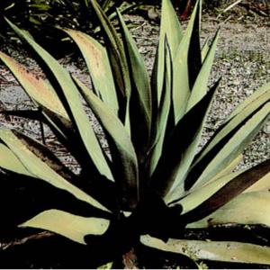 wild plants, herbs, nutrition, recipes, plant identification, health, diet, poisonous, danger