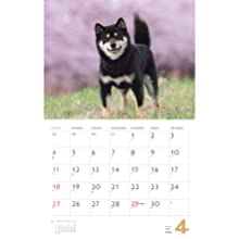 カレンダー2021 柴犬