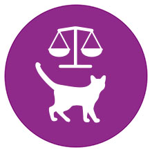 Whiskas, Whiskas Cat Food, Cat Food, Whiskas Pouches, cat food pouches, wet cat food