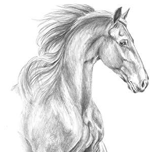 layers graphite, firmly the light and dark areas of the horse create deepest shades black