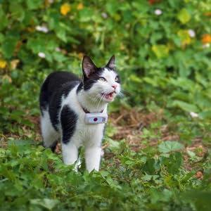 gps gatti