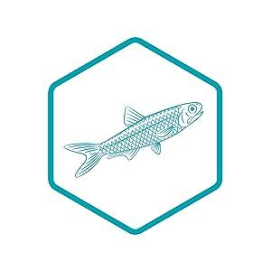 Fresh Fish Oil