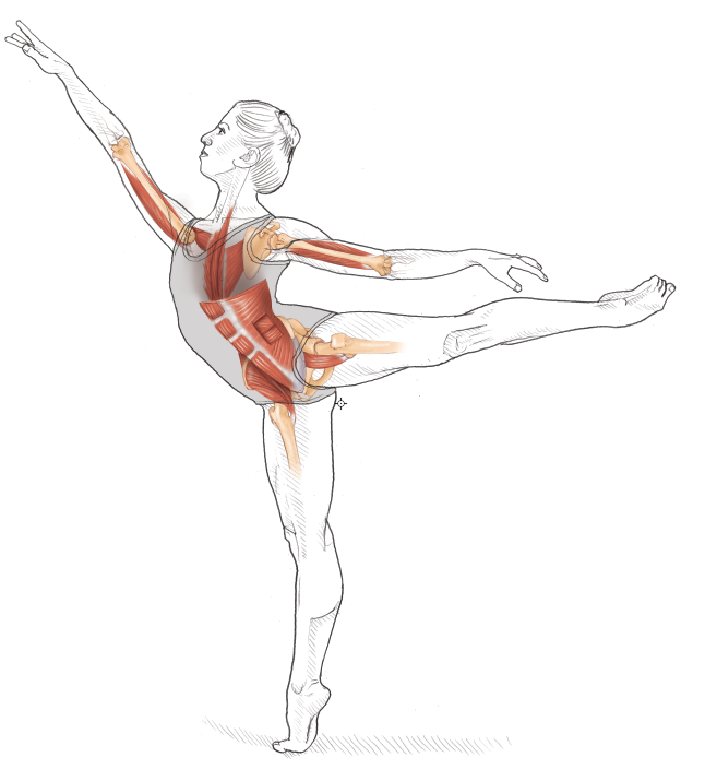 Dance Anatomy 2nd Edition: Jacqui Greene Haas: 9781492545170: Amazon ...